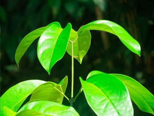 Nihue Rao | Ayahuasca – Medicinal Plants