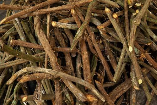 Nihue Rao   Ayahuasca – Medicinal Plants